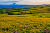 Columbia Hills Vista With Spring Wildflowers