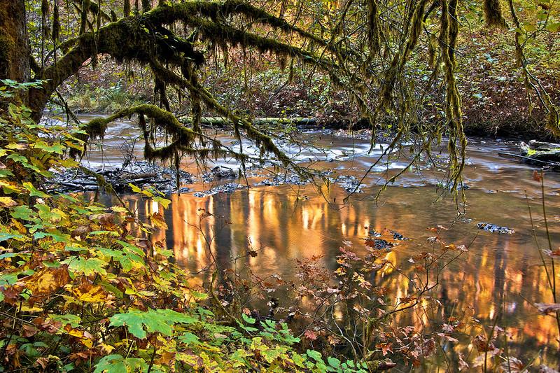 Fall colors of Silver Creek Falls.