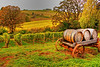 Fall Vineyard in Yamhill County, Oregon