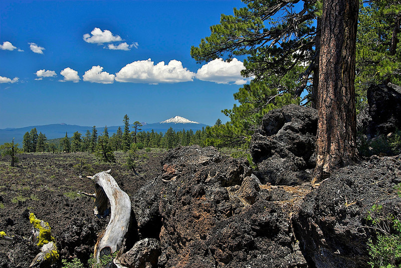 Lava Cast Forest vista, Central Oregon