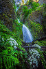 Waterfall in the Columbia Gorge