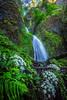 Waterfall in the Columbia Gorge