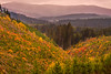 Fall colors of clearcut regrowth