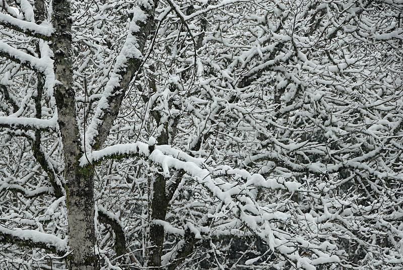 Winter's Design