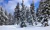 Winter's Beauty.