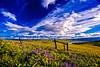 The Dalles Mountain Ranch