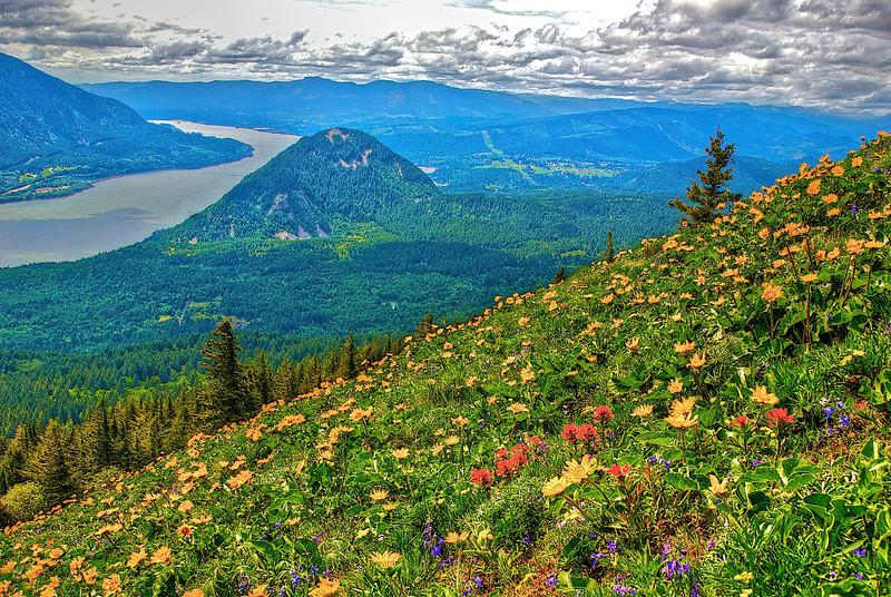 Dog Mountain in the Columbia Gorge