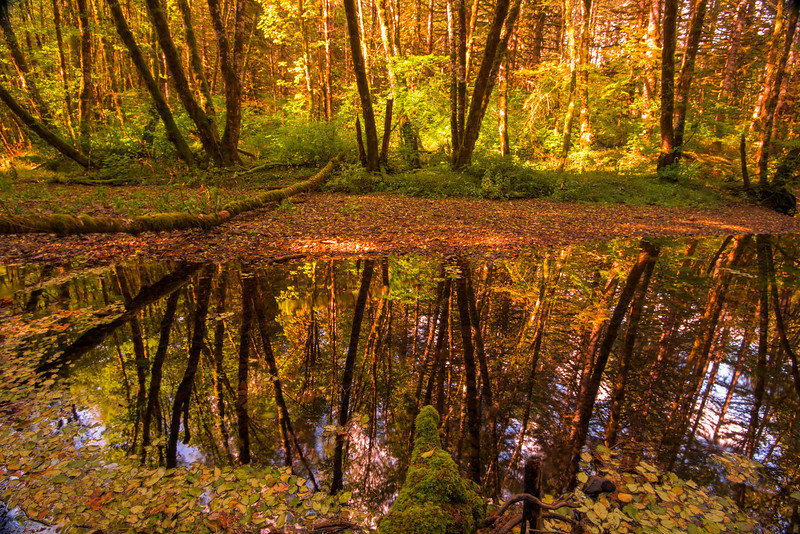 Mirror Image of Fall Colors