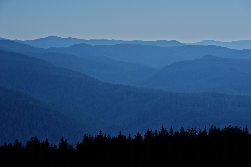 Afternoon fall haze over Mt. Hood forest.