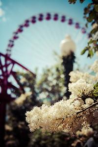 Navy Pier Ferris Wheel in Bokeh