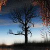 Strong, but alone...Reversed view of a tree. Mogosoaia, Romania, 2005
