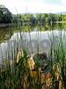 IMG_6661 Tomahawk Lake Edge 1