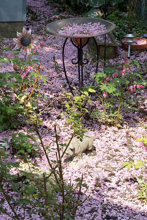 Pink Backyard