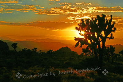 Sunset Extravaganza ~ The last few minutes before the sun dropped behind distant mountains, it was bright and colorful and extravagant in it's glory.  Joshua Tree National Monument, California