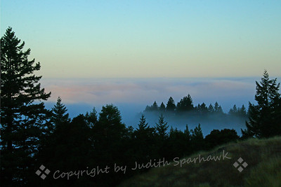 Morning Fog ~ Coming over the hills toward Fort Bragg, California, I came upon this early morning sight of fog blanketing the coast, with only the tops of trees showing through.  With the early light, it was a beautiful sight.