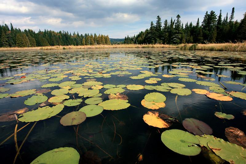 Joe's Pond, VT 07