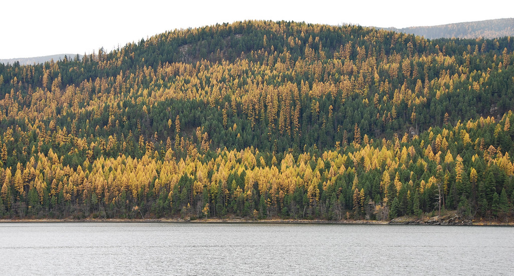 Outside of Missoula, Montana in the fall.