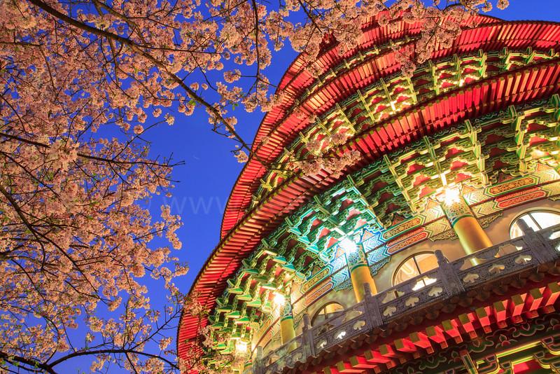 Cherry Blossom at Tien-Yuan Temple @ Taiwan
