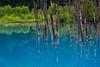 青い池 (Blue Pond) @ Biei, Hokkaido