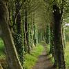 Trees at Lough Lannagh, Castlebar, County Mayo