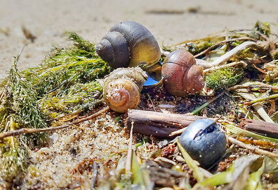 Snail shells washed ashore