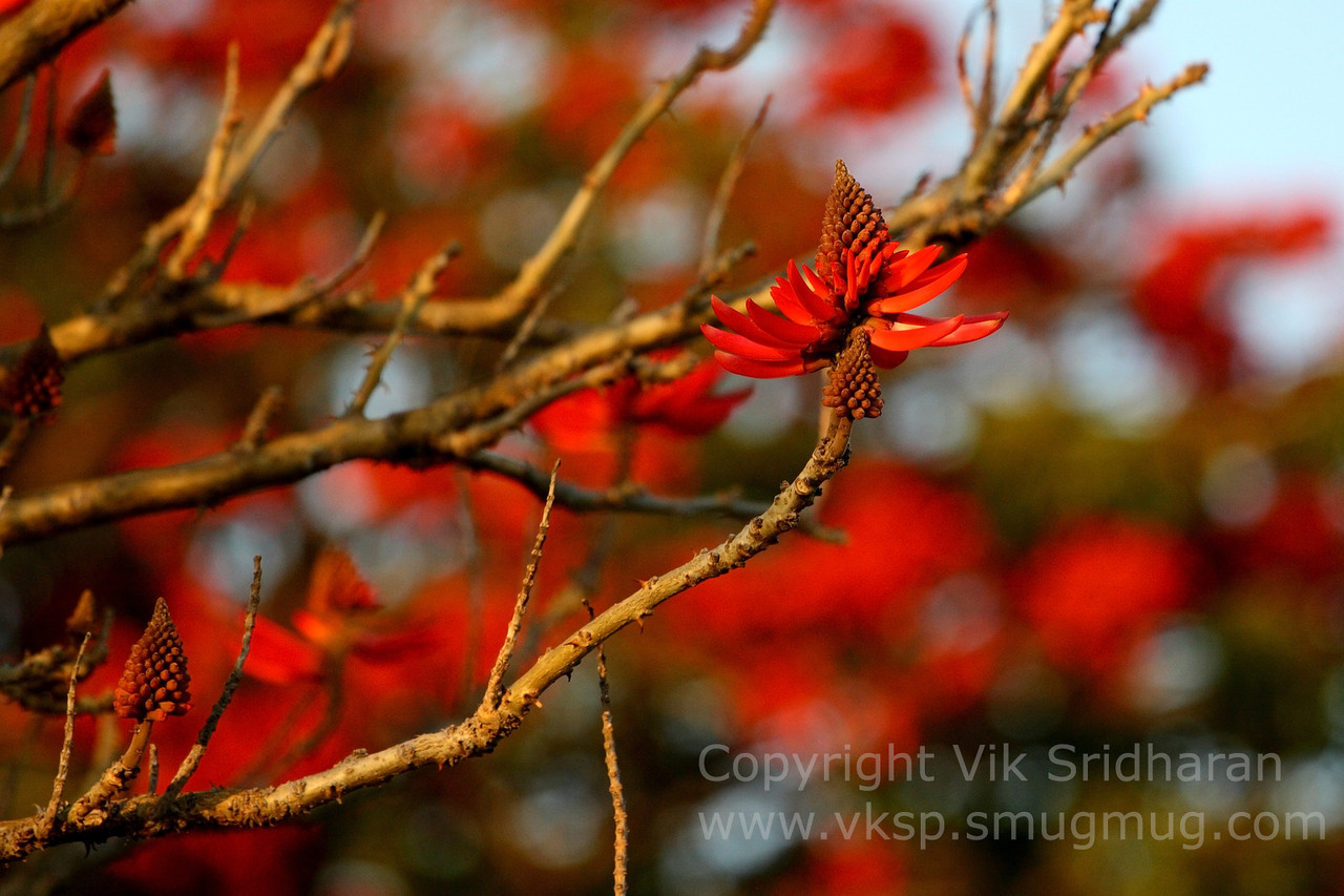 http://www.vksphoto.com/Landscapes/Plants/i-dgrmkBm/0/X2/IMG4602-X2.jpg