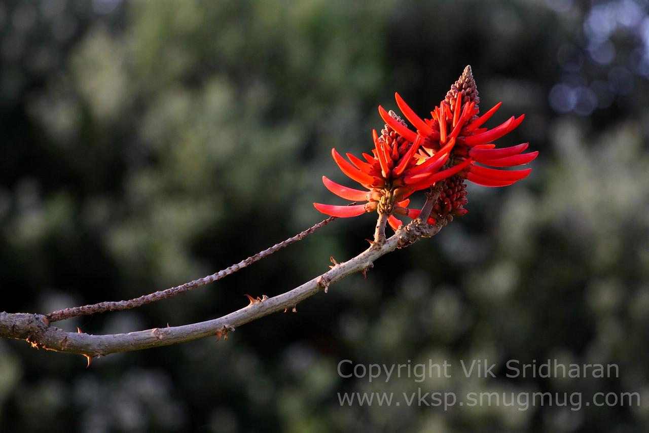 http://www.vksphoto.com/Landscapes/Plants/i-xQZcn7M/0/X2/IMG4600-X2.jpg