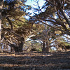 Cypress Grove, Point Lobos Morning: all the moods of a single morning at what is perhaps the most amazing patch of coast in the world.