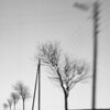 """Trunks and Lines""<br /> Powercables, Toksvaerd, Denmark. Captured with a Lensbaby."