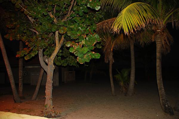 pompano beach (20)