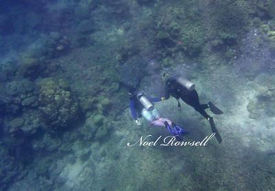 Agincourt Reef P1020733