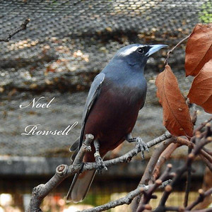 Bird DSCN6315
