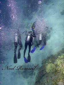 Agincourt Reef P1020605