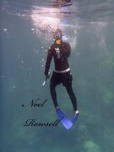 Agincourt Reef P1020589