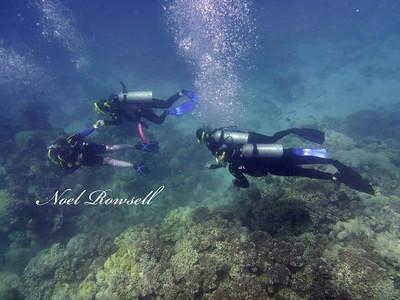 Agincourt Reef P1020669-1