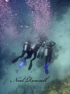 Agincourt Reef P1020606