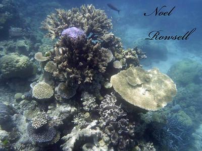Agincourt Reef P1020700