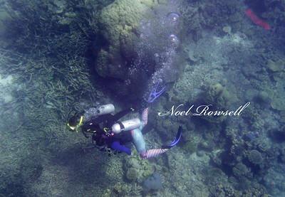 Agincourt Reef P1020732