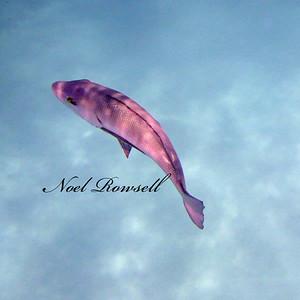Agincourt Reef P1020483