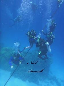 Agincourt Reef P1020564-1