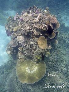 Agincourt Reef P1020487