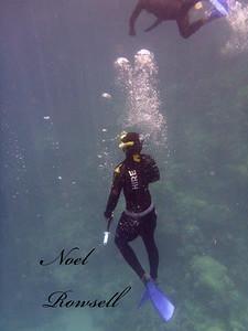 Agincourt Reef P1020588