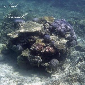 Agincourt Reef P1020712-1