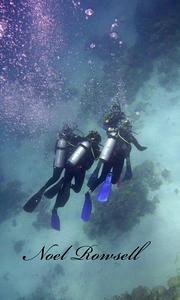 Agincourt Reef P1020607