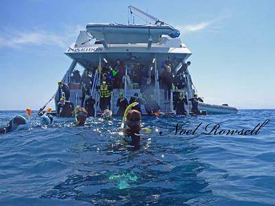 Agincourt Reef P1020675-1