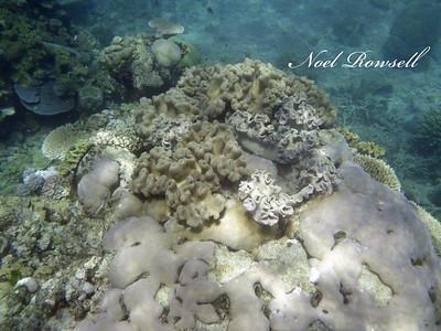 Agincourt Reef P1020758
