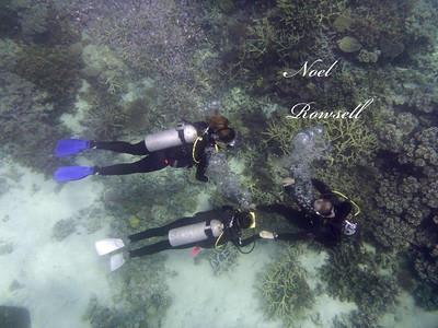 Agincourt Reef P1020791