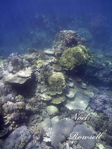 Agincourt Reef P1020750