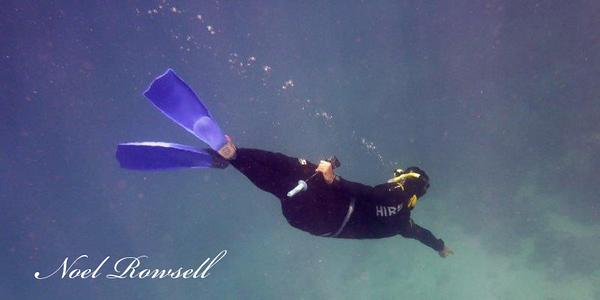 Agincourt Reef P1020586