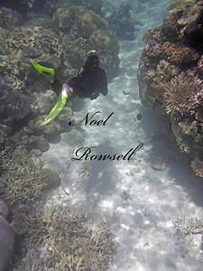 Agincourt Reef P1020624